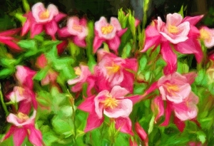 1-Columbine Paint Full size