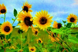 1-e Flowers Paint